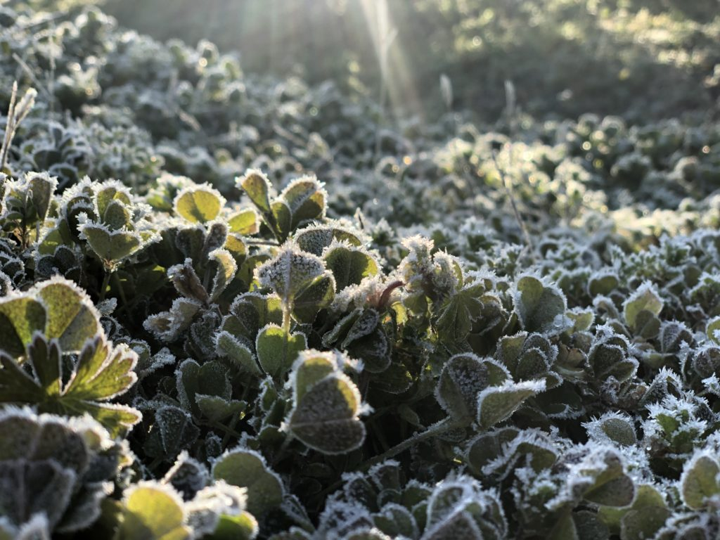 霜がおりた朝の美しい風景