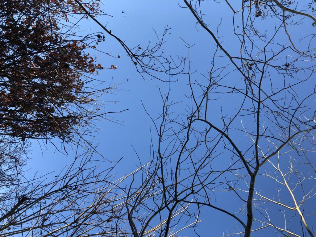 青い空に冬の雑木