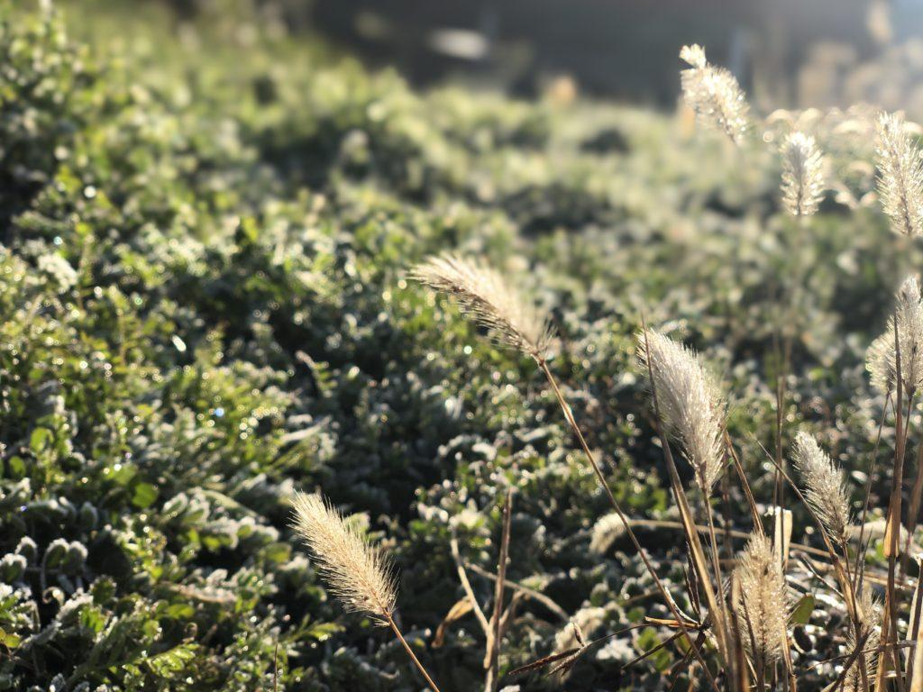 霜がおりた風景と光